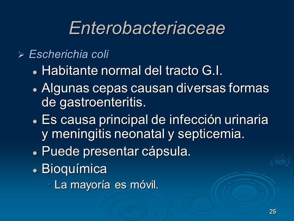 Enterobacteriaceae Habitante normal del tracto G.I.