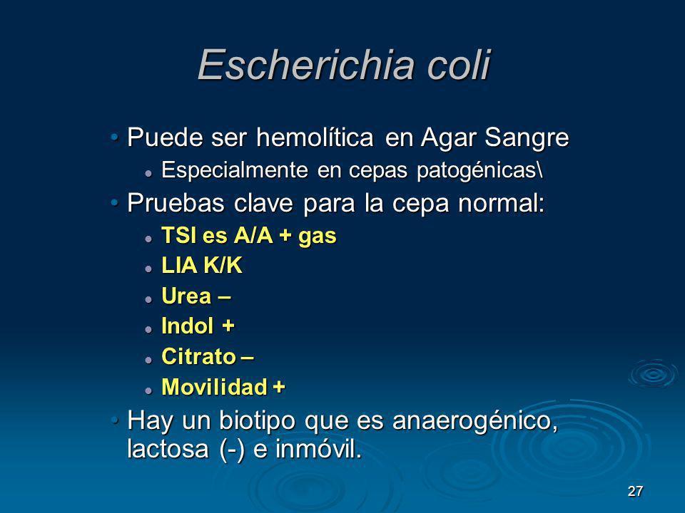 Escherichia coli Puede ser hemolítica en Agar Sangre