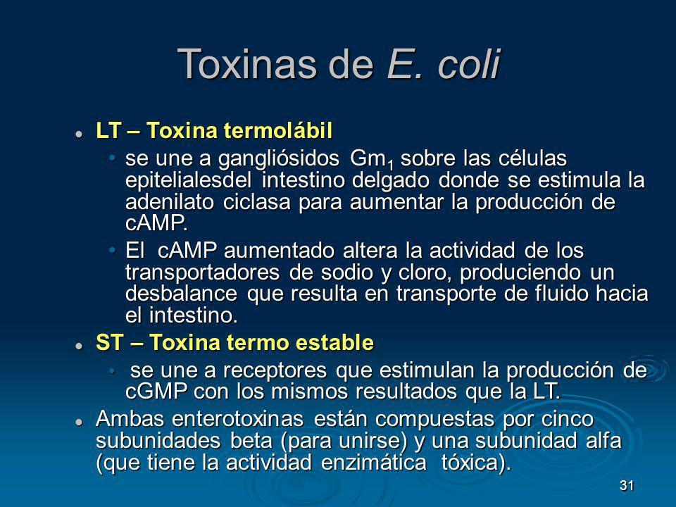 Toxinas de E. coli LT – Toxina termolábil