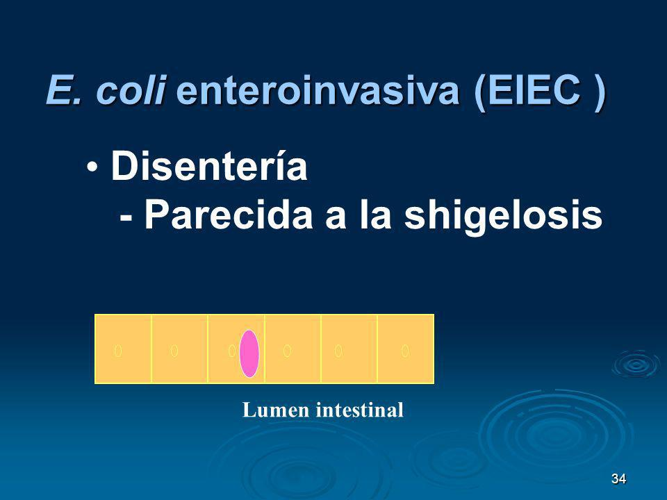 E. coli enteroinvasiva (EIEC )