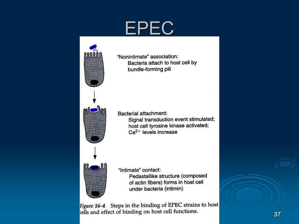 EPEC 37