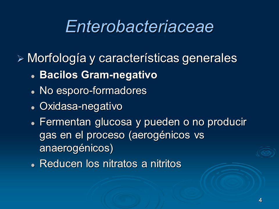 Enterobacteriaceae Morfología y características generales