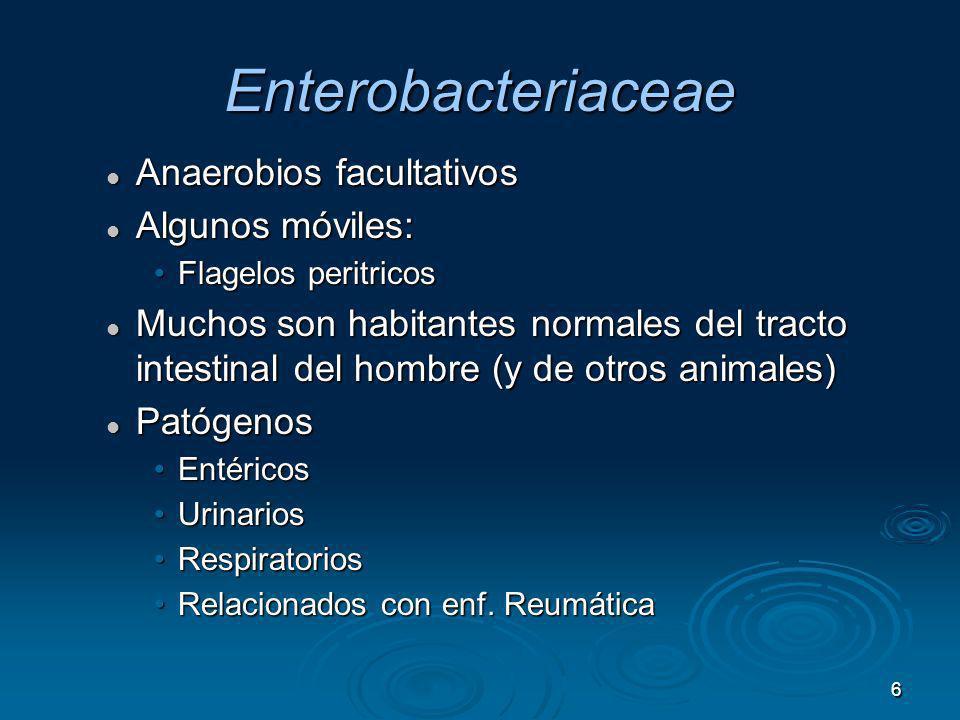 Enterobacteriaceae Anaerobios facultativos Algunos móviles: