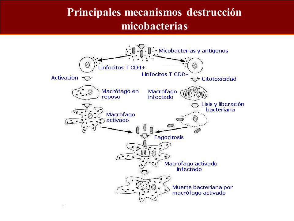 Principales mecanismos destrucción micobacterias