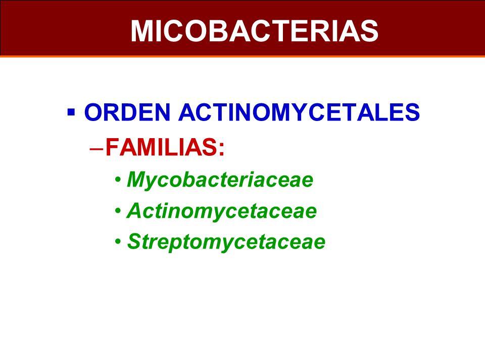 MICOBACTERIAS ORDEN ACTINOMYCETALES FAMILIAS: Mycobacteriaceae