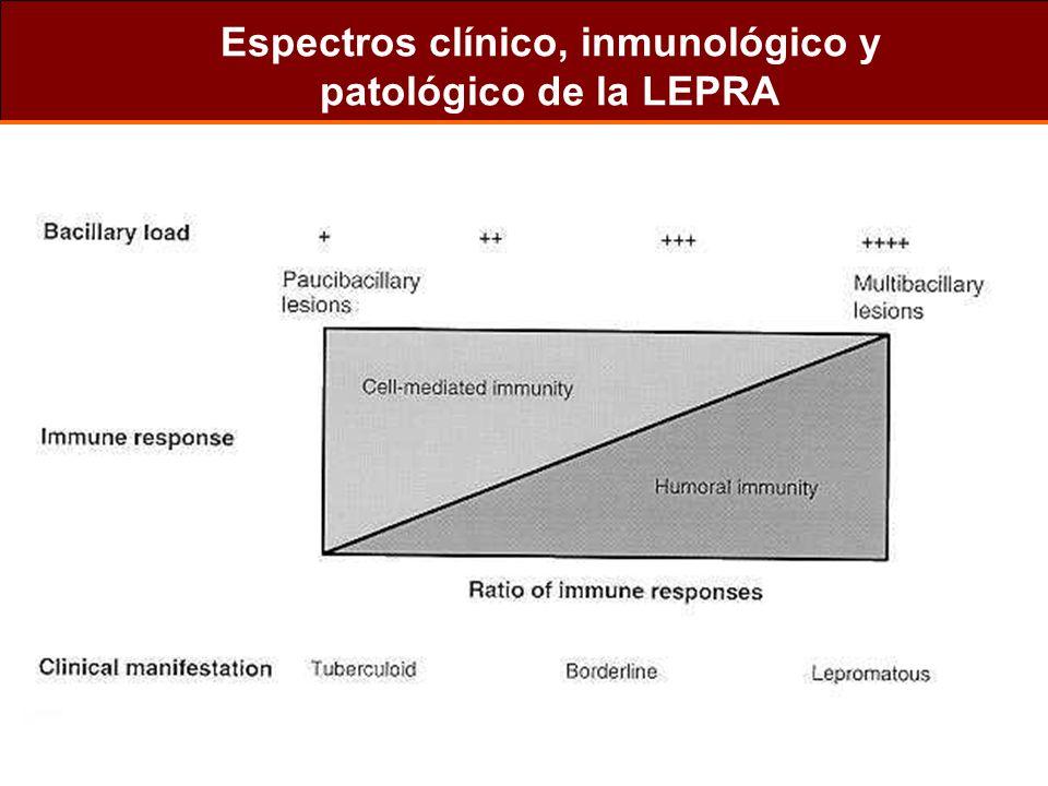 Espectros clínico, inmunológico y patológico de la LEPRA