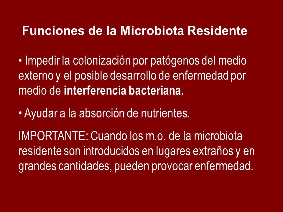 Funciones de la Microbiota Residente