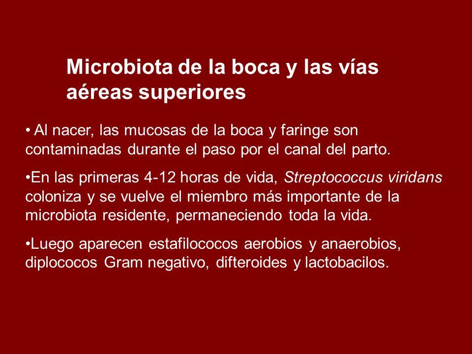 Microbiota de la boca y las vías aéreas superiores