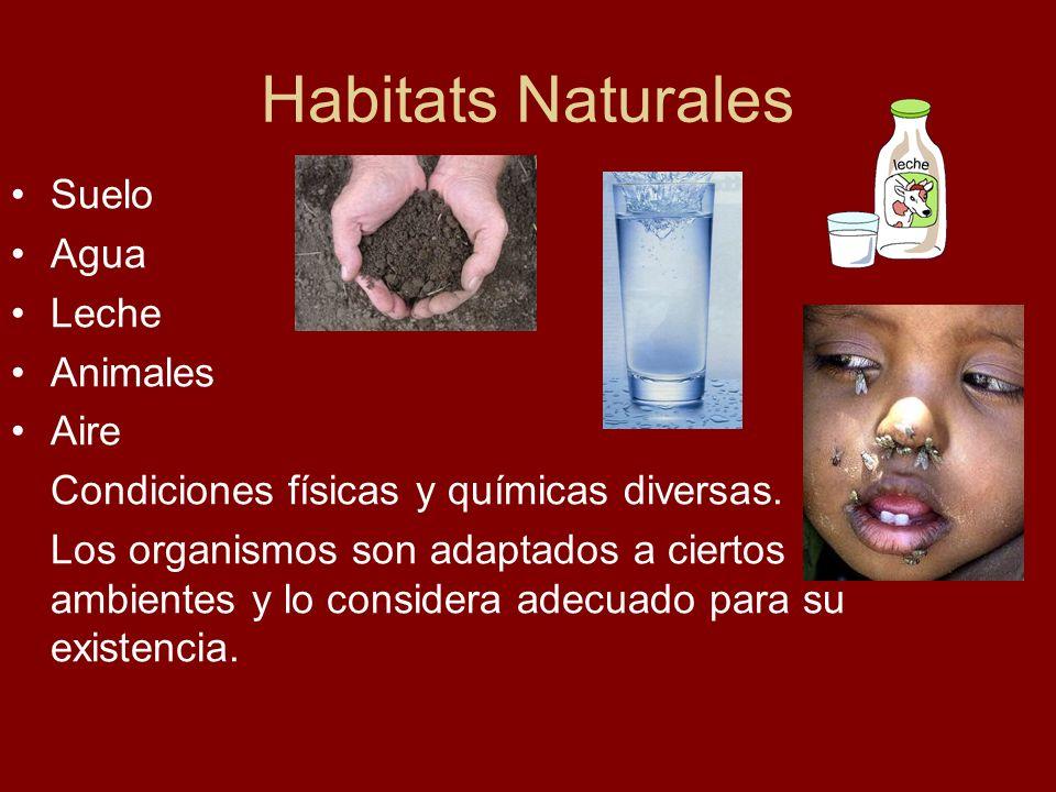 Habitats Naturales Suelo Agua Leche Animales Aire