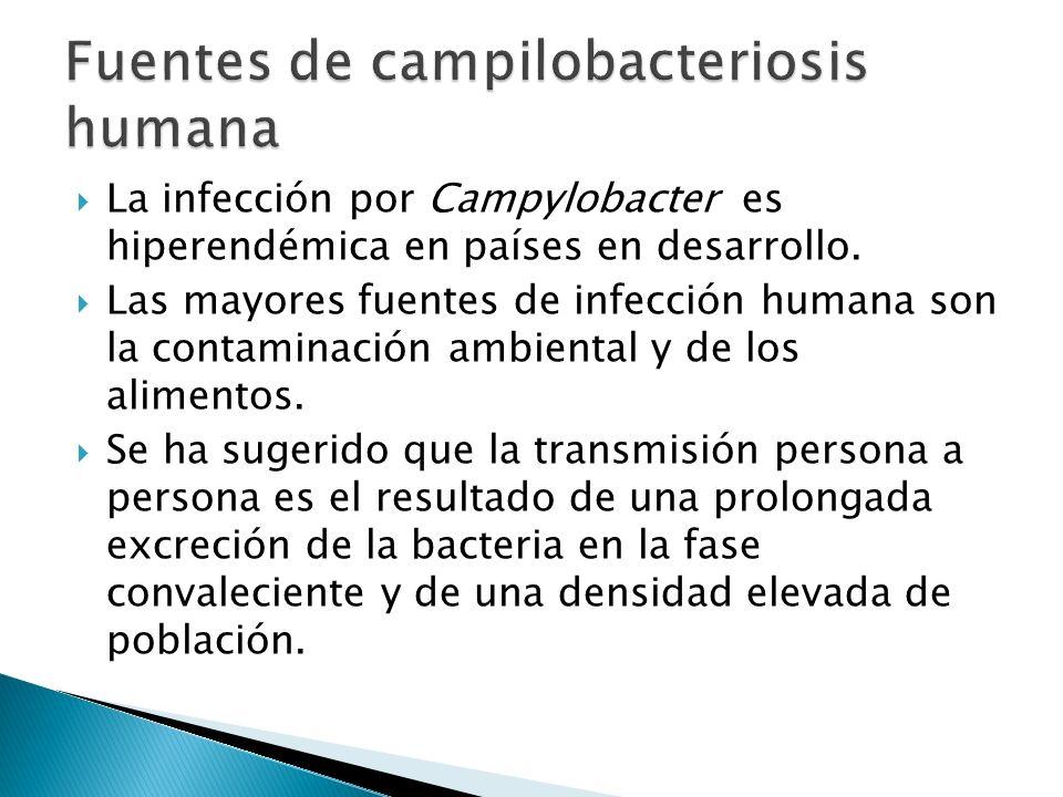 Fuentes de campilobacteriosis humana