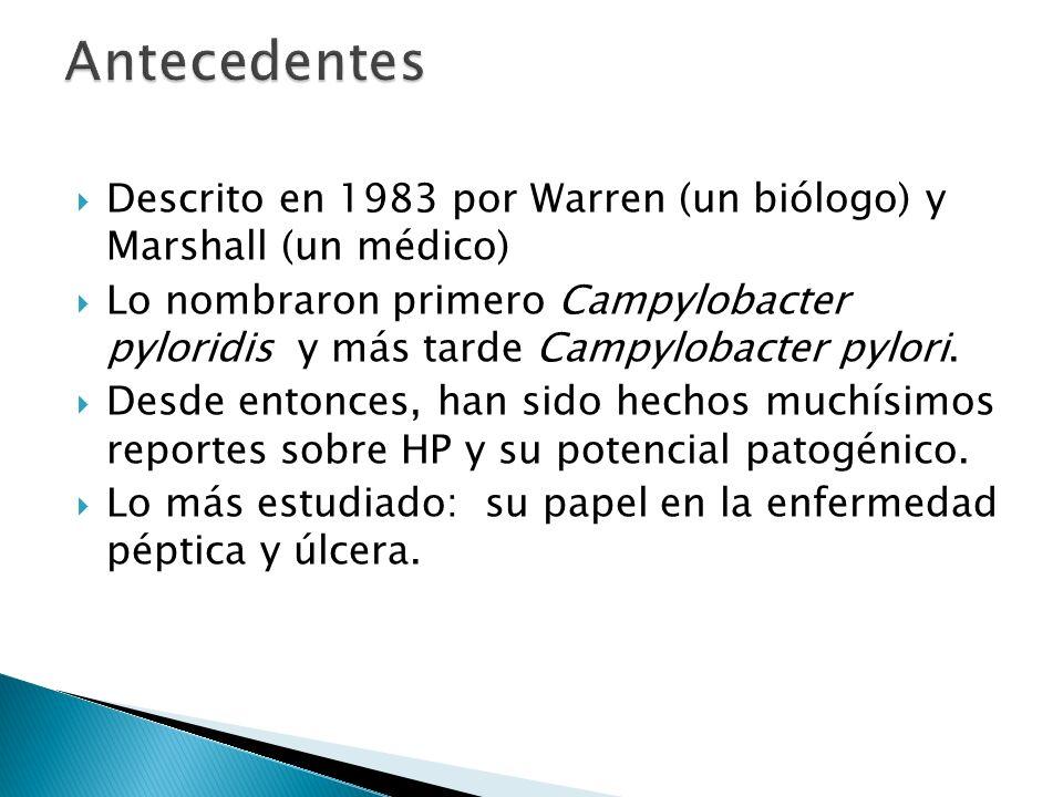 Antecedentes Descrito en 1983 por Warren (un biólogo) y Marshall (un médico)