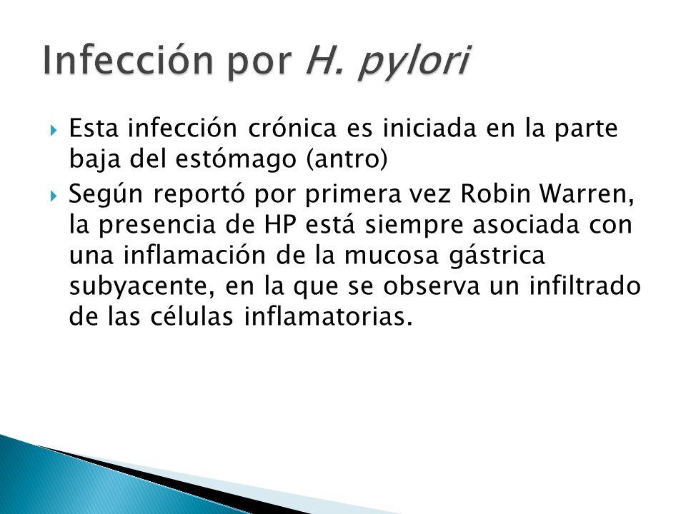 Infección por H. pylori Esta infección crónica es iniciada en la parte baja del estómago (antro)