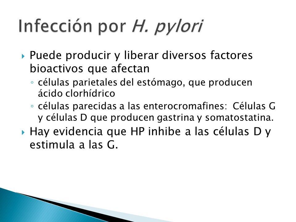 Infección por H. pyloriPuede producir y liberar diversos factores bioactivos que afectan.