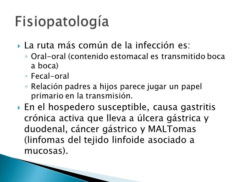 Fisiopatología La ruta más común de la infección es: