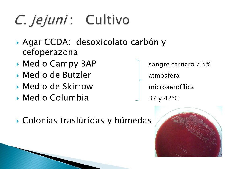 C. jejuni : Cultivo Agar CCDA: desoxicolato carbón y cefoperazona