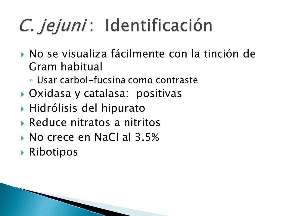 C. jejuni : Identificación