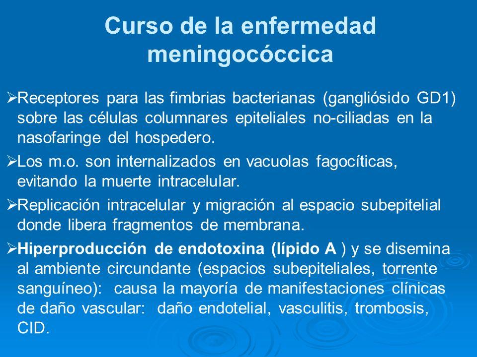 Curso de la enfermedad meningocóccica