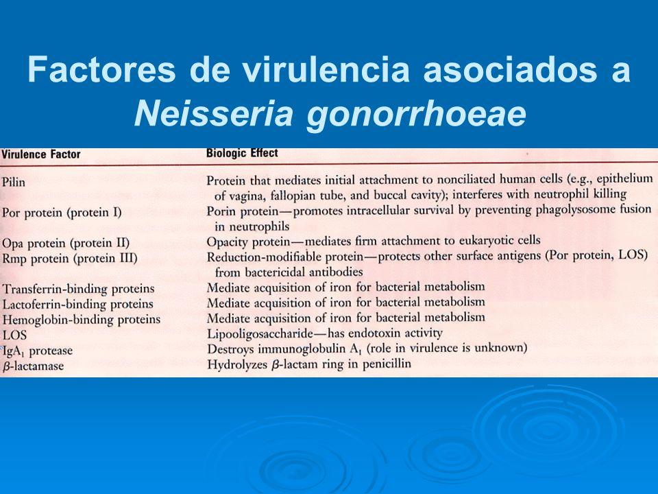 Factores de virulencia asociados a Neisseria gonorrhoeae