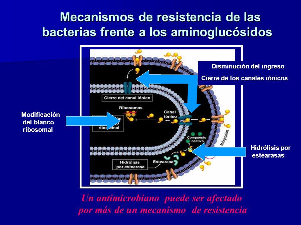 Mecanismos de resistencia de las bacterias frente a los aminoglucósidos