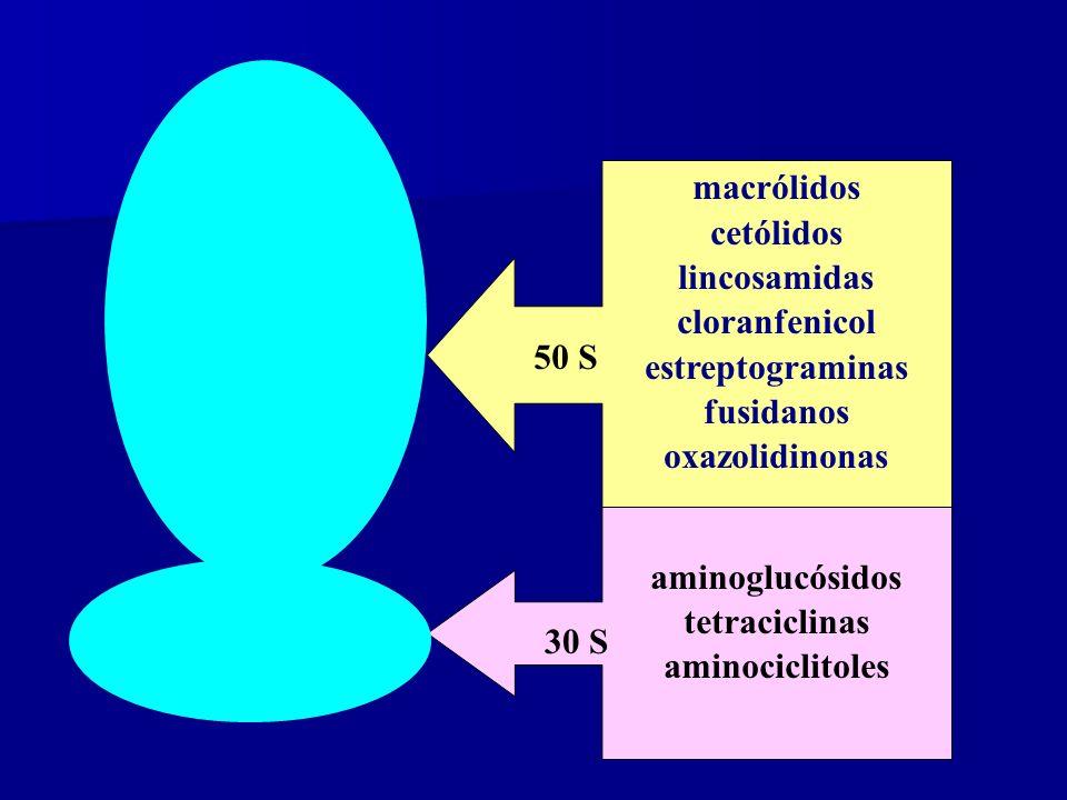 macrólidos cetólidos. lincosamidas. cloranfenicol. estreptograminas. fusidanos. oxazolidinonas.