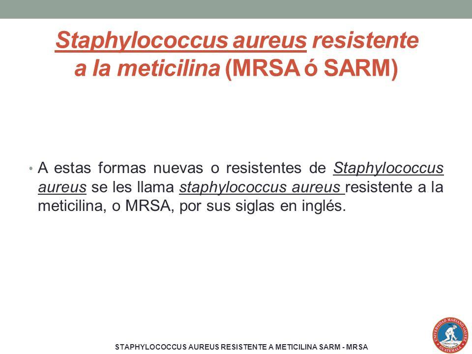 Staphylococcus aureus resistente a la meticilina (MRSA ó SARM)