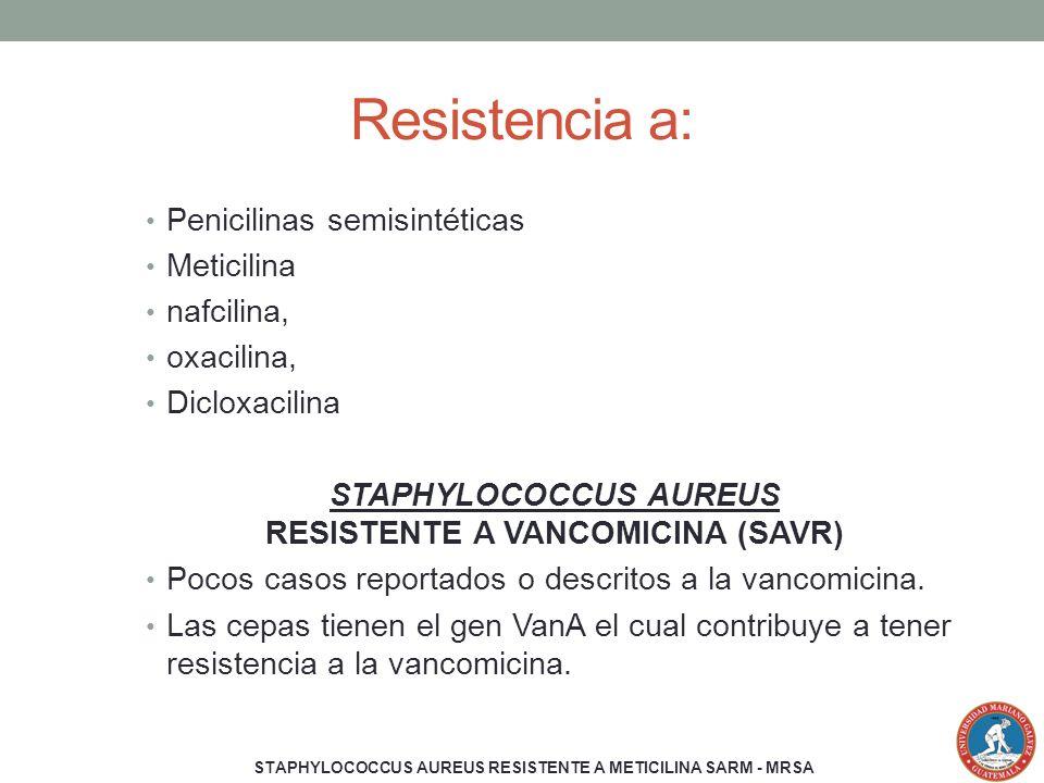 STAPHYLOCOCCUS AUREUS RESISTENTE A VANCOMICINA (SAVR)