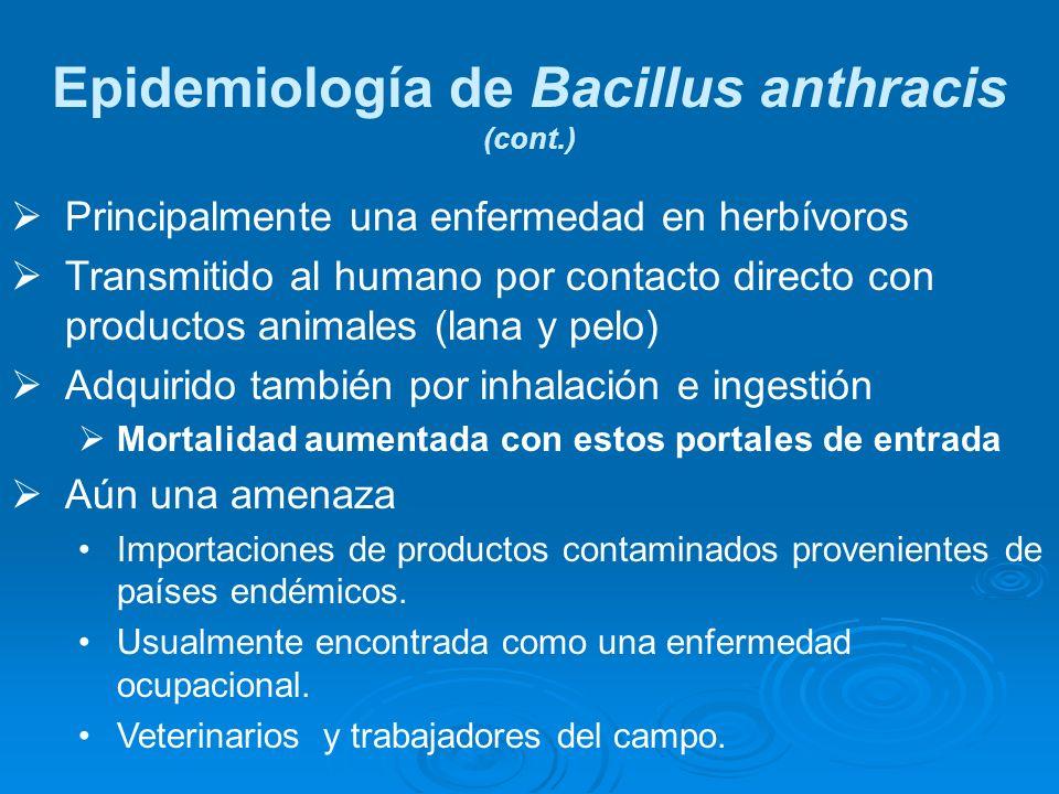 Epidemiología de Bacillus anthracis (cont.)