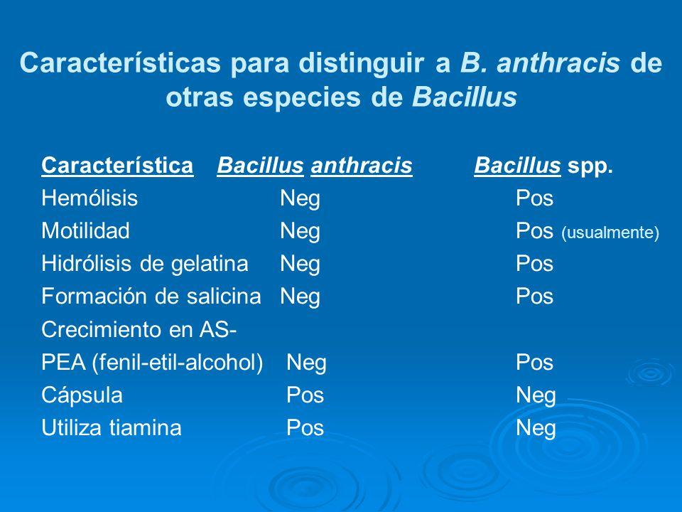 Características para distinguir a B