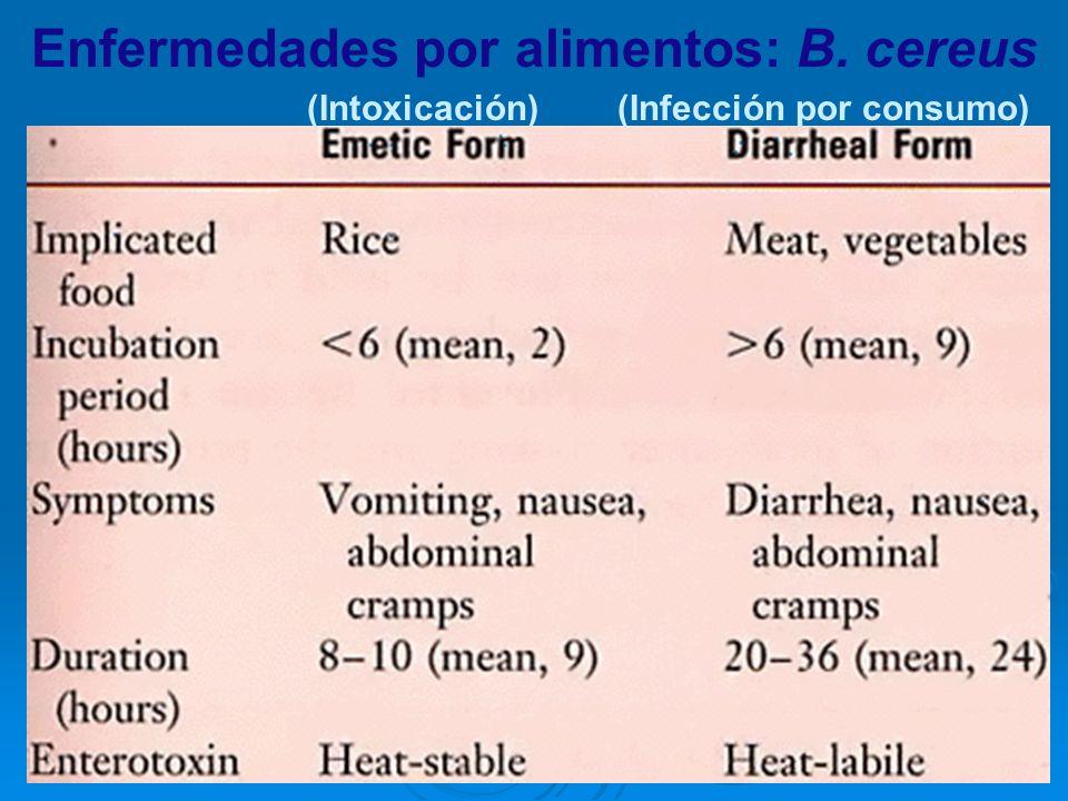 Enfermedades por alimentos: B. cereus (Infección por consumo)