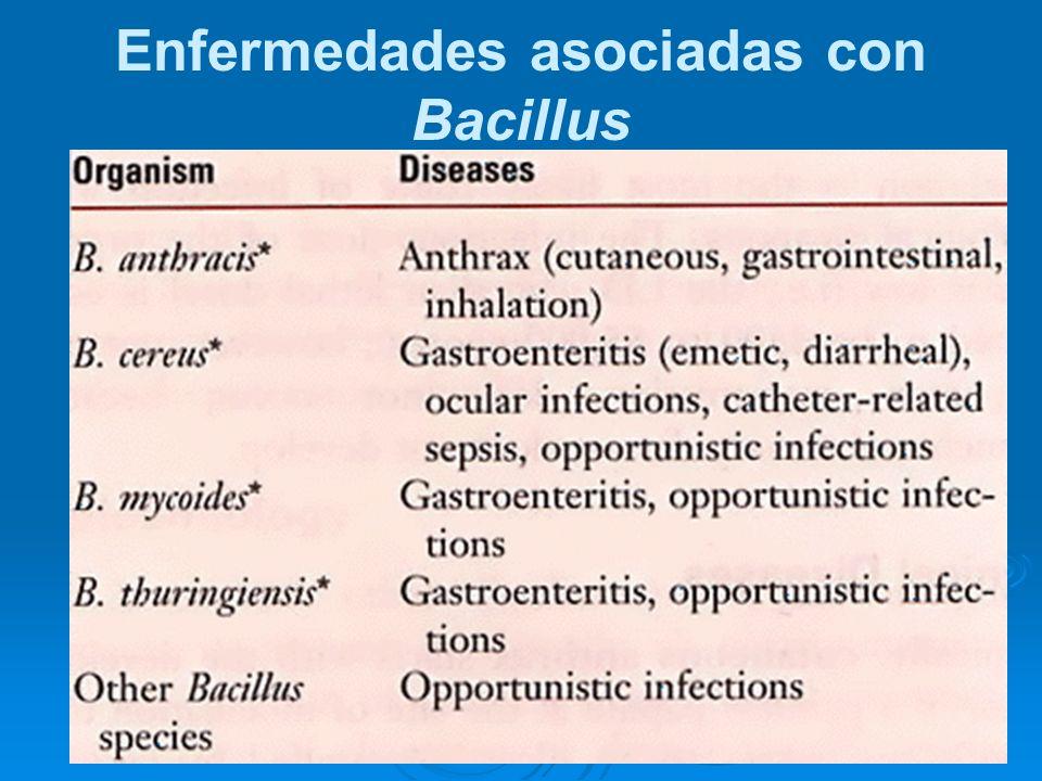 Enfermedades asociadas con Bacillus
