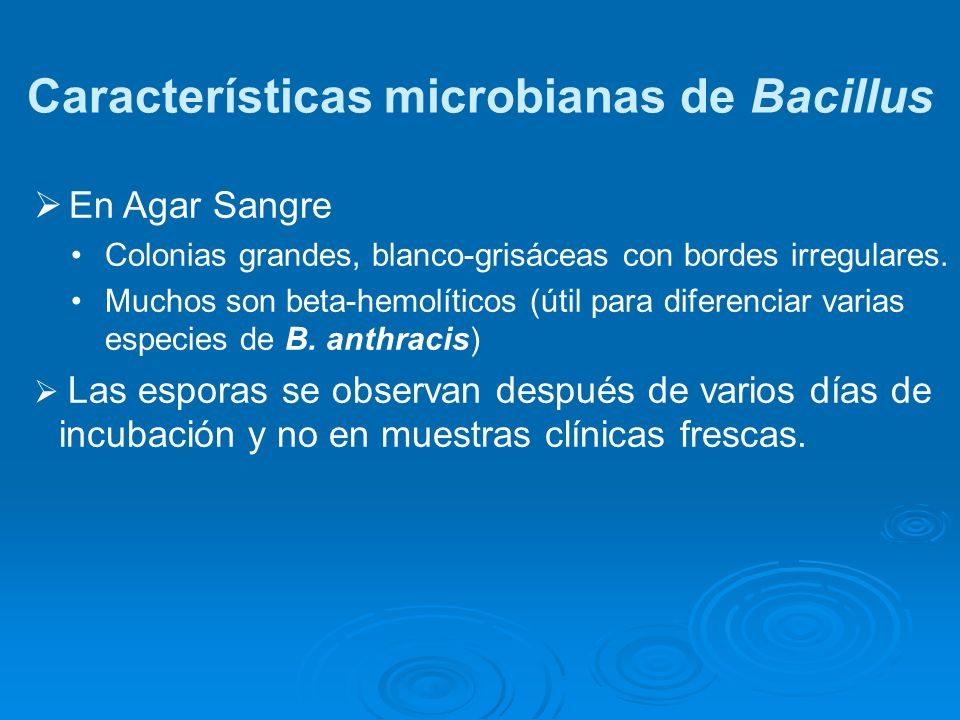 Características microbianas de Bacillus