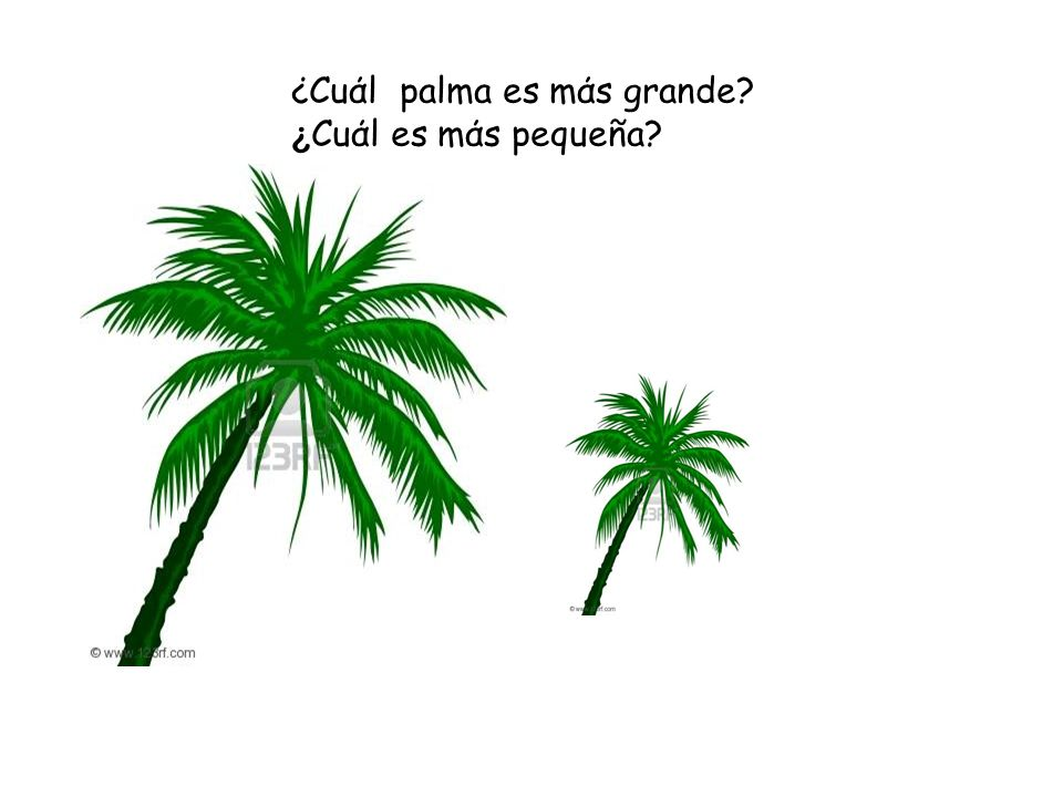 ¿Cuάl palma es mάs grande ¿Cuάl es mάs pequeña