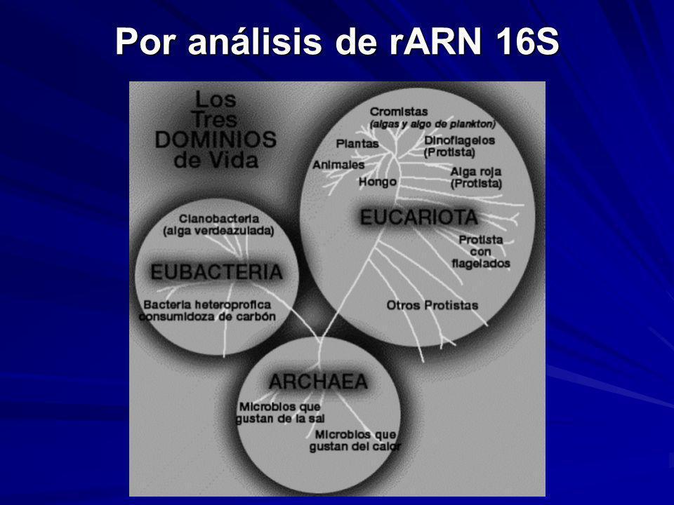Por análisis de rARN 16S