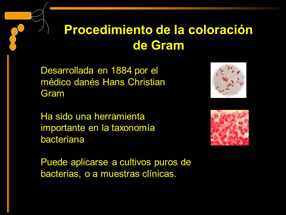 Procedimiento de la coloración de Gram