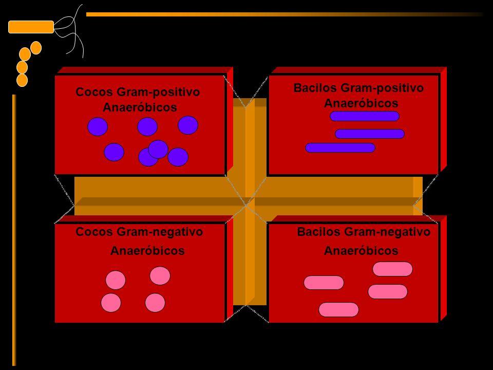 Bacilos Gram-positivo