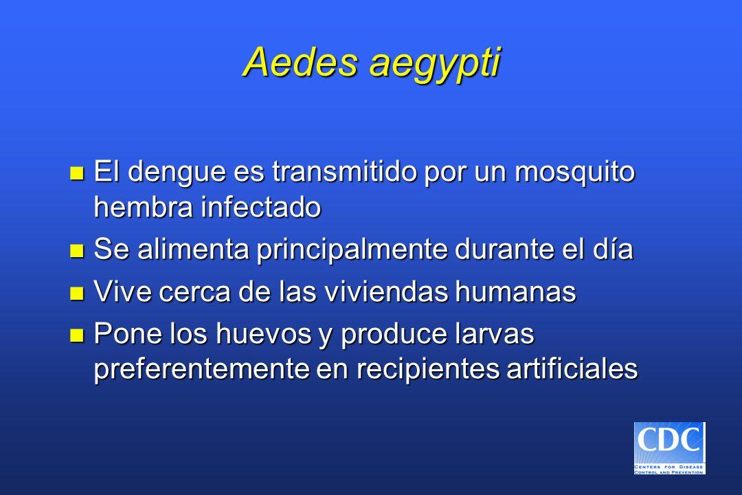 Aedes aegypti El dengue es transmitido por un mosquito hembra infectado. Se alimenta principalmente durante el día.
