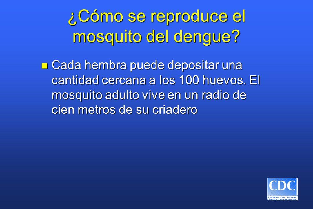 ¿Cómo se reproduce el mosquito del dengue