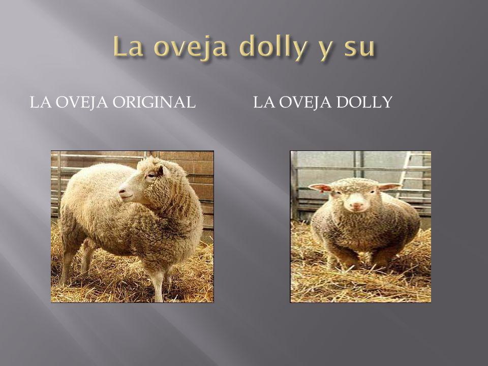 La oveja dolly y su La oveja original La oveja dolly