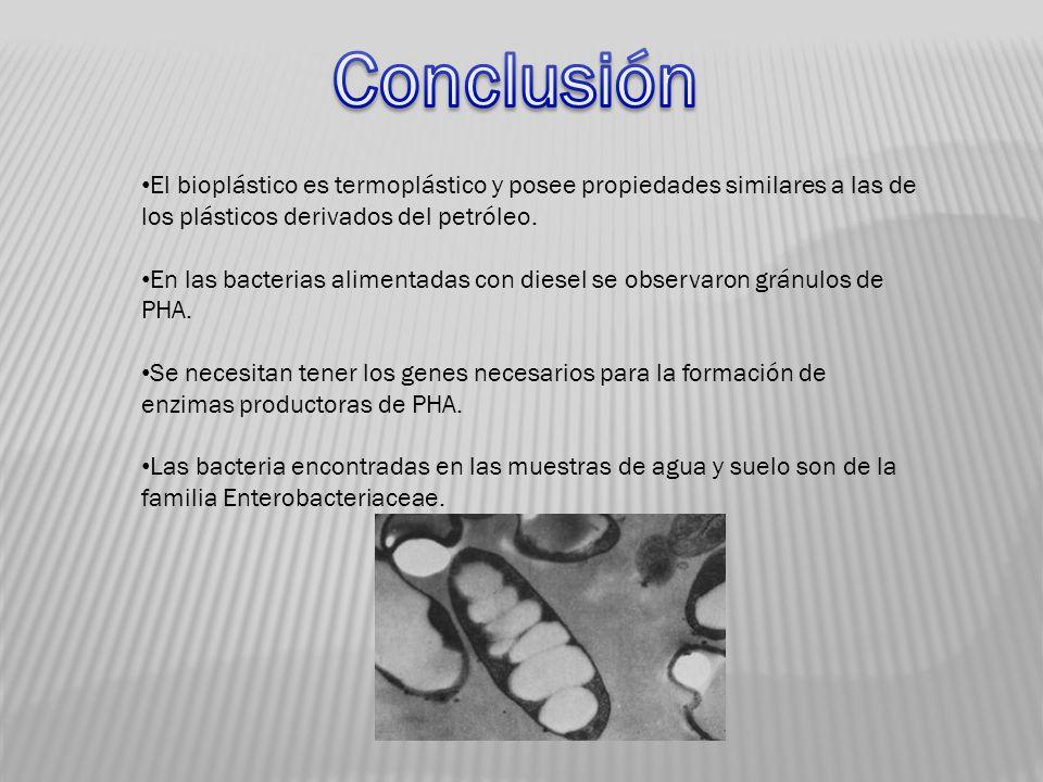 Conclusión El bioplástico es termoplástico y posee propiedades similares a las de los plásticos derivados del petróleo.