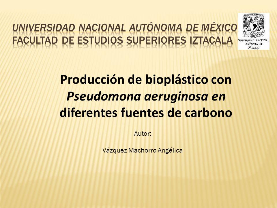 Vázquez Machorro Angélica