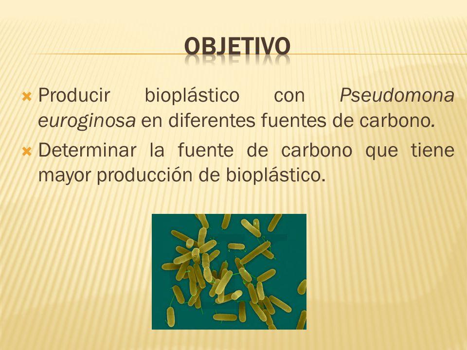 Objetivo Producir bioplástico con Pseudomona euroginosa en diferentes fuentes de carbono.