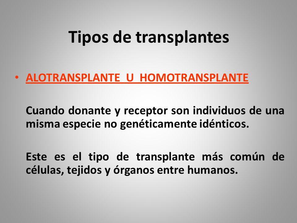 Tipos de transplantes ALOTRANSPLANTE U HOMOTRANSPLANTE