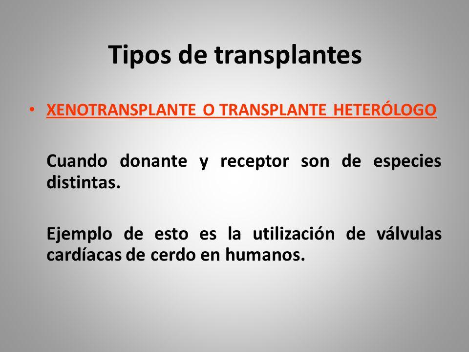 Tipos de transplantes XENOTRANSPLANTE O TRANSPLANTE HETERÓLOGO. Cuando donante y receptor son de especies distintas.