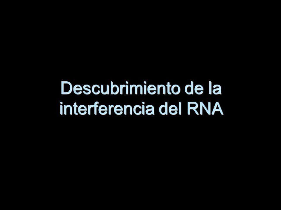 Descubrimiento de la interferencia del RNA