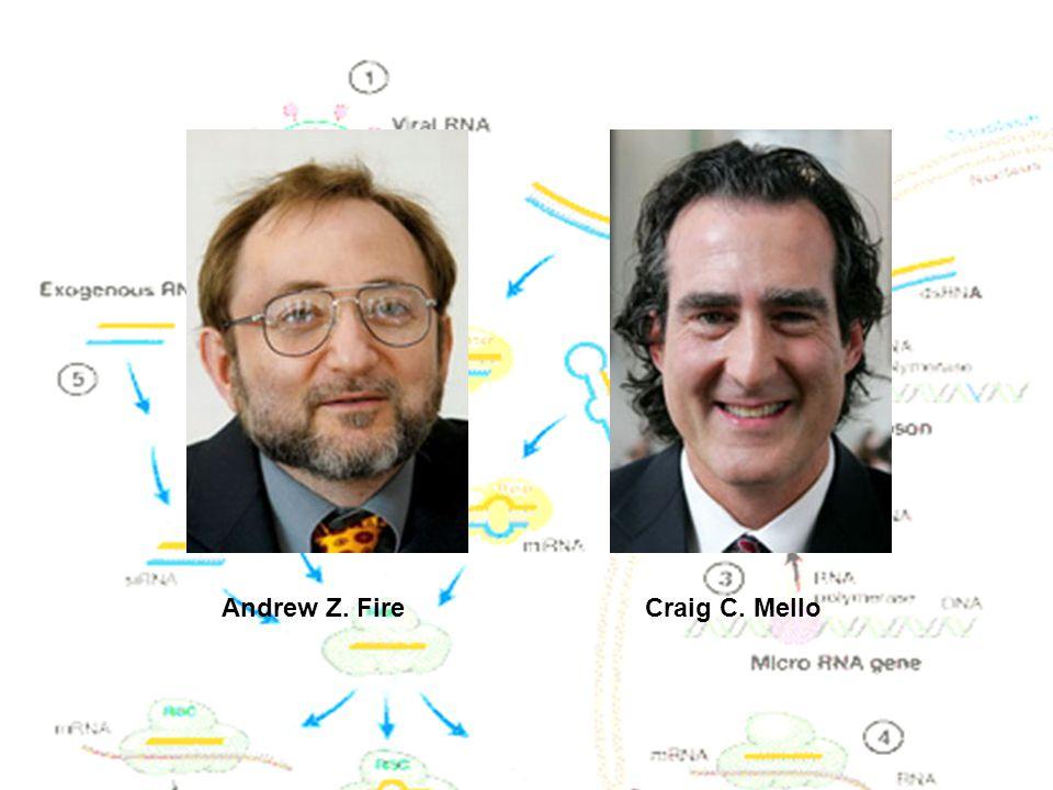 Andrew Z. Fire Craig C. Mello