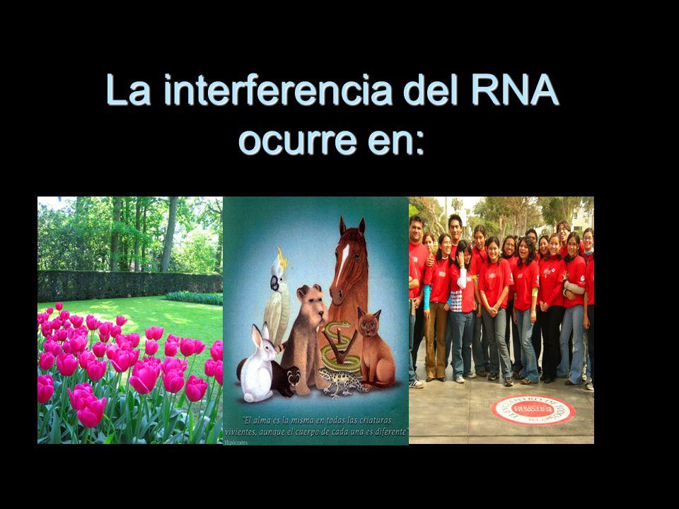 La interferencia del RNA ocurre en: