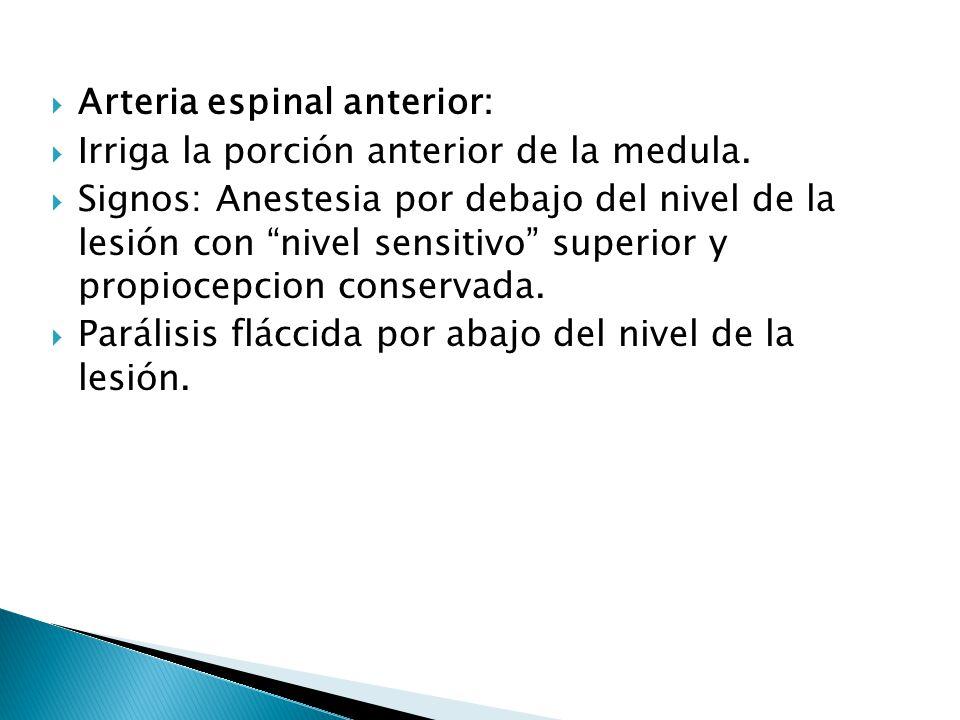 Arteria espinal anterior: