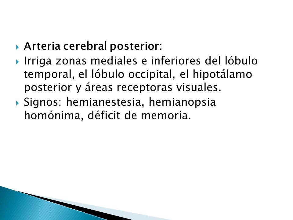 Arteria cerebral posterior: