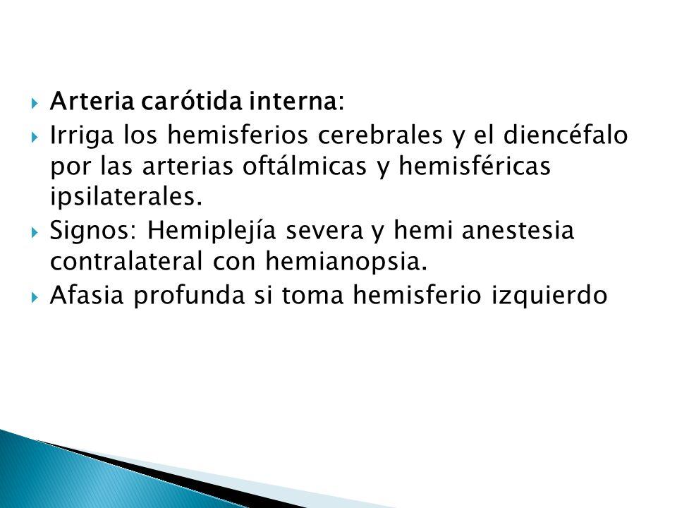 Arteria carótida interna: