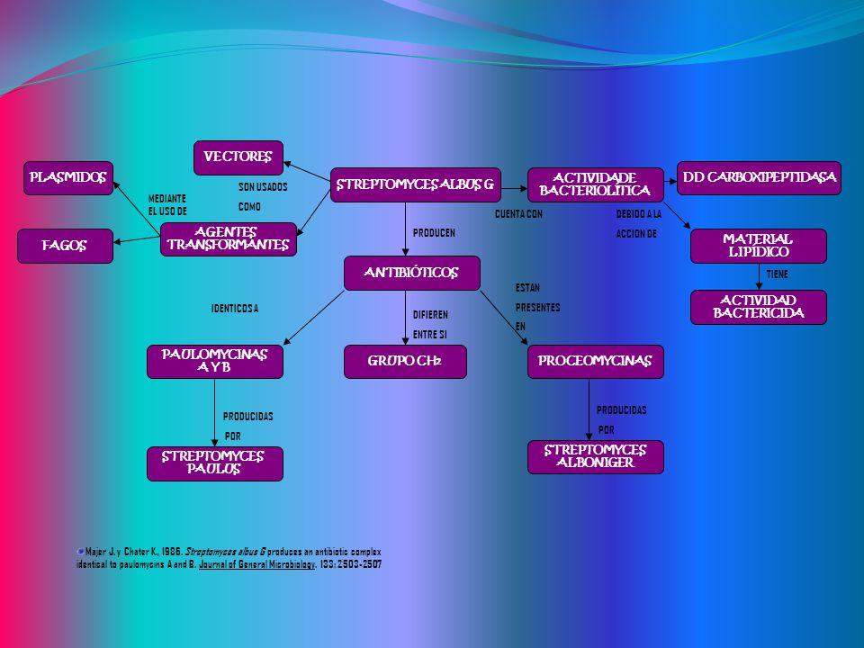 STREPTOMYCES ALBUS G ANTIBIÓTICOS. PAULOMYCINAS. A Y B. GRUPO CH2. STREPTOMYCES. ALBONIGER. PAULUS.